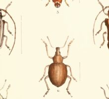 Aid to the identification of insects Charles Owen Waterhouse 1890 V1 V2 156 Various Sticker