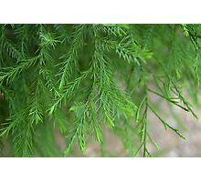 Plant Photographic Print