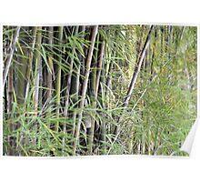 green bamboo Poster