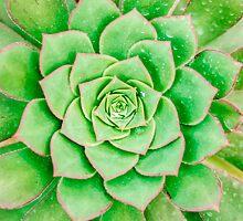 Green Flower by MMPhotographyUK