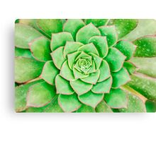 Green Flower Canvas Print