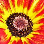September Flower by Rupert Connor