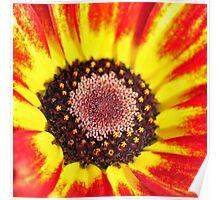 September Flower Poster