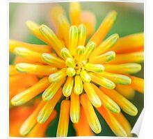 Atom Orange Flower Poster