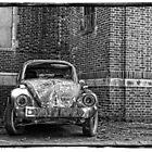 Bug. by vertigoimages