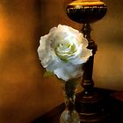 Lamplight Rose by RC deWinter