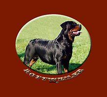 Rottweiler  by Matterotica