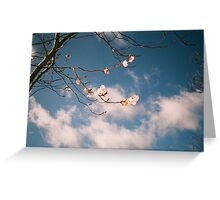Cherry Blossoms Blue Sky Greeting Card