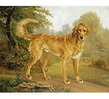 Niels Aagaard Lytzen - A Golden Retriever On A Path. Dog painting: Retriever, dogs, doggy, lucky, pets, wild life, animal, smile,  Golden, kids, nature Photographic Print
