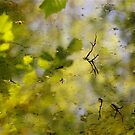 Pond Woods by Mike  Waldron