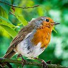 Robin's Rest by vivsworld