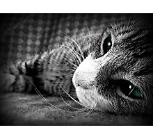Because who doesn't love kittens? Photographic Print