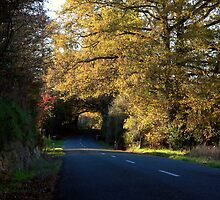 Dovedale tree tunnel  by Duncan Cunningham