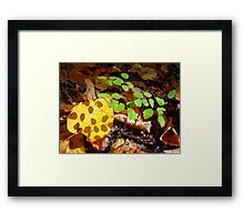 Shaded Leaf Framed Print