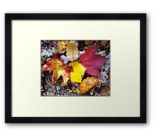 Leaves on the Trail Framed Print