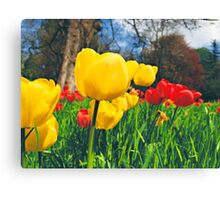 Spring & Tulips Canvas Print