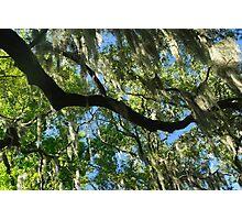 Savannah Trees Photographic Print