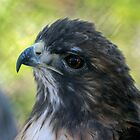 521 grey eagle by pcfyi