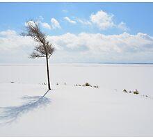Winter Untouched by BrasdOrLife