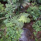 Birds eye view of a rainforest creek  -   Daintree Rainforest  FNQ by john  Lenagan
