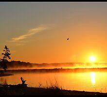 Eagle Sunrise on the Bras d'Or by BrasdOrLife