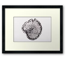 Old Growth Pine from Albion Basin, Utah Framed Print