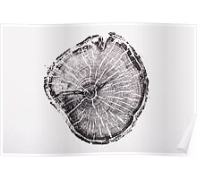 Old Growth Pine from Albion Basin, Utah Poster