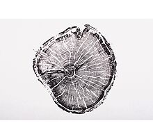 Old Growth Pine from Albion Basin, Utah Photographic Print