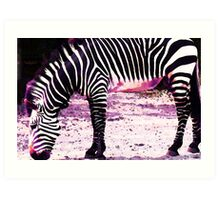 Colorful Zebra 2 - Buy Black And White Stripes Art Art Print
