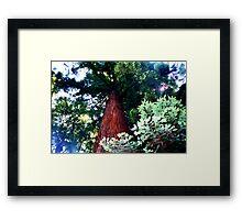 Redwood Framed Print