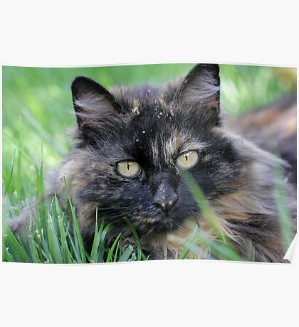 Dusty Tortie Poster