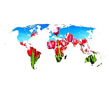 World of Tulips Photographic Print