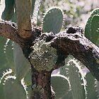 Cactus fence by Lynn Starner