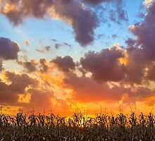 Glorious Harvest - Indiana Sunset by Kenneth Keifer