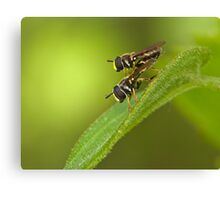 hoverfly couple Canvas Print