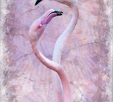 Flamenco by Krys Bailey