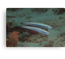 Threadfin Dartfishes Canvas Print