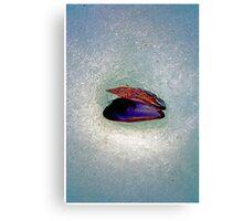 Snow Shell Canvas Print
