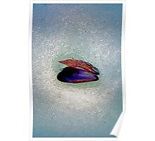 Snow Shell Poster