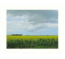 Clouds and canola Art Print