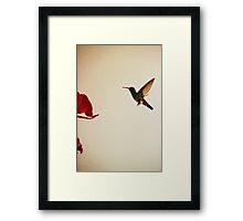 Hummingbird In Tulua, Colombia II Framed Print