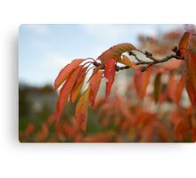 Autumn fall leaves on a branch Canvas Print