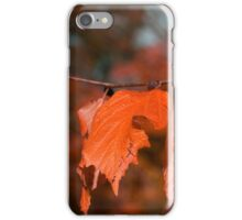 Autumn fall leaves on a branch iPhone Case/Skin