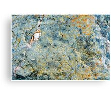 Bras d'Or Baby Crab Canvas Print