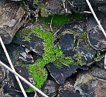 Moss on a fire wood pile by Carolyn Clark