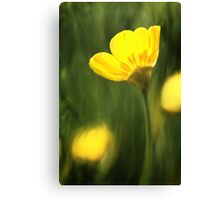 Sunlit buttercup abstract Canvas Print
