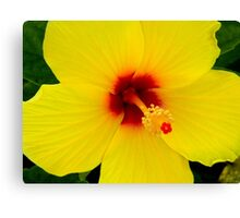 Tropical Flower - Yellow Hibiscus Canvas Print