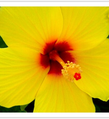 Tropical Flower - Yellow Hibiscus Sticker