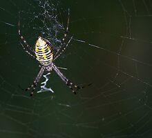 On a Web by lindsycarranza