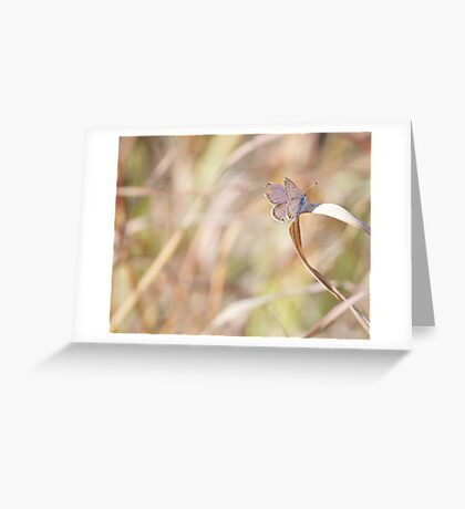 Torn Wing resting on Dried Grass Greeting Card
